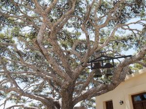 Tree Preveli